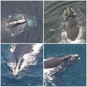 Kaggle Right Whale Recognition
